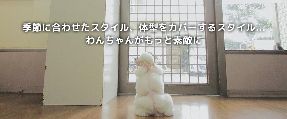 犬の美容室 ぽち